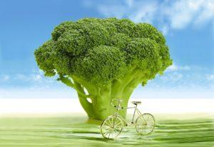 Propiedades y beneficios del brócoli quemagrasa